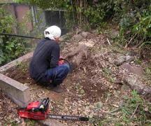 庭木の完全除去